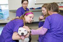 EVIT Veterinary Assistant