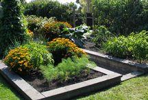Garden dreams / Gardening ideas