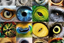 Animals and Humans' eyes