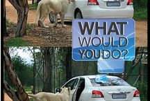 What would you do? / #crazy #car situations!
