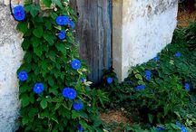 blu... / by Beckii Cooper