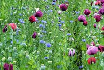 Wiesen Stil | Lars Schönberg / Blumenwiesen sind wundervolle Beispiele dafür, wie menschliche Nutzung Artenvielfalt fördern kann. Bringen wir ein Stück Wiese in unsere Gärten. Gesät oder gepflanzt. Vieles ist möglich.