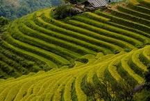 Travel to world tea / Lieux, découverte du monde à travers des lieux de thé.