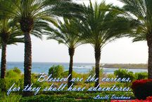 Travel Quotes / Are you curious about #Curacao?  Indulge your #CURiosity and learn about luxury #Caribbean #vacations at Santa Barbara Beach & Golf Resort.
