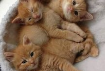CUTEST THINGS IN THE WORLD (Cats and kittens)