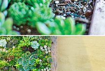 G - Succulents - Sedum / Variety of Sedum Succulents
