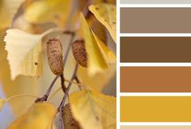 Ballweg Home / Remodel color scheme options