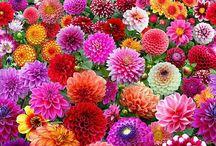 pola kwiatów