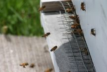 BEE KEEPING / by The Sustainable Life