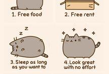 CATS!!!! / Cats yay
