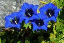 Flowers / All kind of beautyful flowers