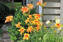Gardening- Xeriscaping & Drought-tolerant / Xeriscaping and drought-tolerant landscaping / by Peggy Cope