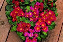 Valentines Day | Colorado Alpines & Wildflower Farm / Gardening is for lovers. Get plant-inspired Valentines ideas here.  www.thewildflowerfarm.com