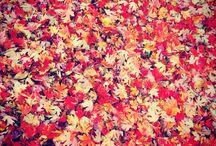 Fall / Beautiful season
