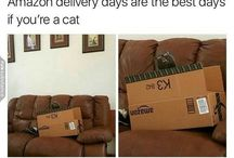 Catlady life