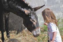 I nostri animali / Gli animali della fattoria
