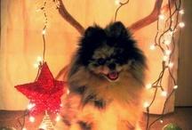 Festive Pets
