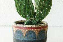 Cacti lover alert