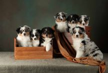 Favorite Doggies:
