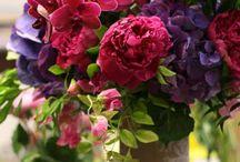 Fiori, colori,profumi / Ti piacciono i fiori, soprattutto quelli di campagna? QUI trovi una raccolta dei più belli!
