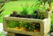 Outdoor Ponds & Aquaria