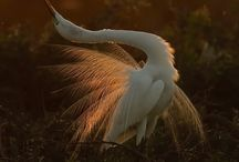 ¶Birds Poetry