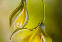 Photography - Flowers / by Priya Elias