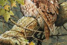 uilen schilderijen / strawberry uil