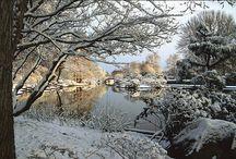 White - Winter's Beauty