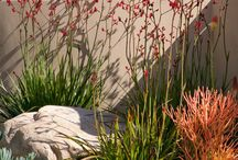 Drought tolerant / by Mary Koch
