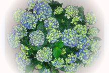 Blütenpracht Frühling 2016 / Blütenpracht Frühling 2016 - Impressionen