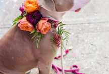 Wedding Pooch