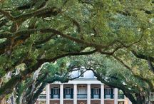Oak Alley Plantation / The most famous plantation in the River Parishes