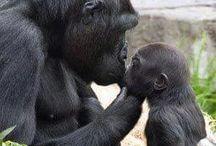 La bella mamma