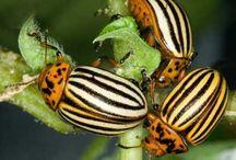 Огород от насекомых