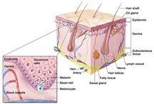 Stem Cell Hair Regrowth