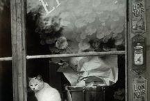 gatos à janela