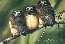 Owls / by Twixle Twixle