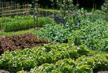 Dream of a garden / gardening