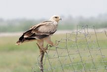 Bird Sanctuaries in Rajasthan / Sanctuariesindia: Here you can get information about all Bird Sanctuaries, National Parks, Forests in Rajasthan, India.