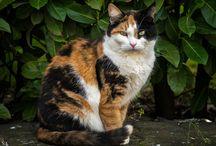 Glückskatze / Tiere, Katzen