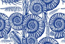 Ammonite fabric / Fabrics, wallpapers and gift cards with unique designs of Italian artist, fantastic for home and decoration. Themes, patterns and colors also on order. I like it! http://www.spoonflower.com/profiles/chicca_besso