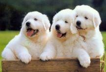 Cuteness Overload :)