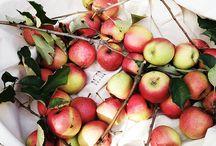 Apples / by Michal Herbstman