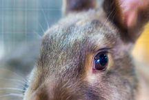 うさぎ(Rabbit)