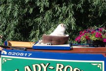 Canal Boat Pet Safety / Canal Boat / Narrowboat Pet Safety