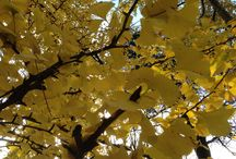 Winter / Che meraviglia i colori dell'autunno, ogni stagione, ci porta sempre un dono speciale.