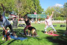 Doga / Yoga para amos y mascotas