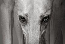 Greyhound / by J. Vachelle Thomas