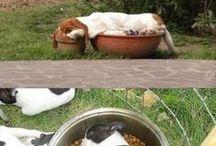 Sleeping Animals
